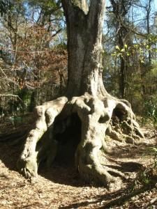 Hiding Tree