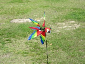 "Our ""yard"" macaw from KewlKites, Long Beach, MS"