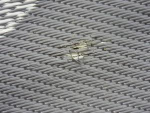 Damaged Yard Rug