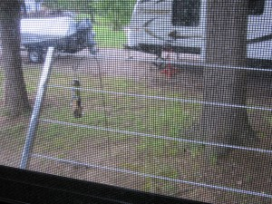 Bumper clothesline and new feeder seen through the screen of the back window