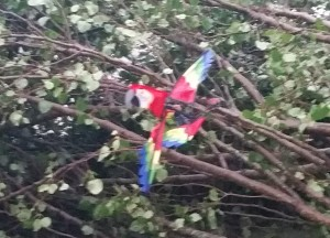 The remains of Mac the Macaw