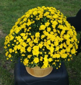 Lovely mums