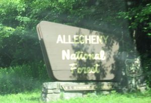 The rare National Forest sign, more difficult to spot that Bigfoot.