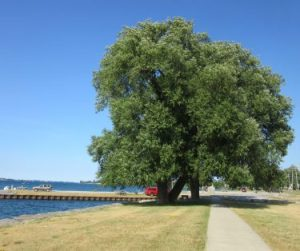 Large, luscious trees