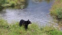 Bear Jim watched in Alaska