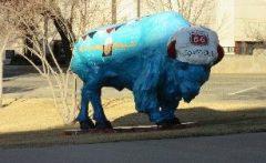 bison-10