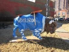 bison-7