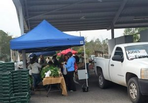 Some of the vendors; this was an organic grower