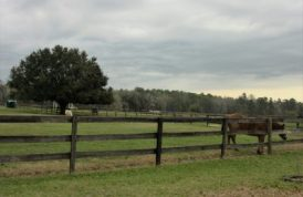 More of the pastures