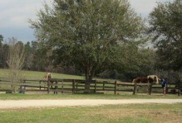 Horses (and mules) are in groups based on their needs.
