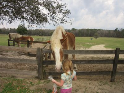 Though large, these older horses love children feeding them.