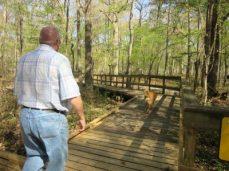 Boardwalk part of trail