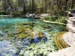 Spring pool in FL SP