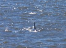 1 of 3 pictures of the dolphins who played while we watched