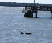 2 of 3 dolphin pictures