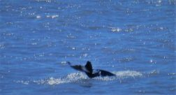 3 of 3 of dolphin pictures