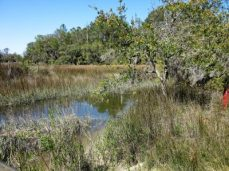 Another of the creeks running through the marsh land