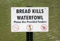 I did not know - no more bread for geese or ducks