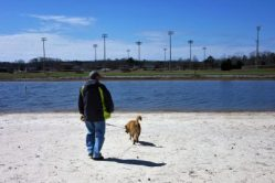 Several ball fields across water