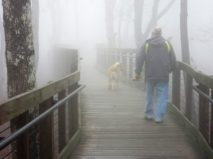 My men walking in the mist