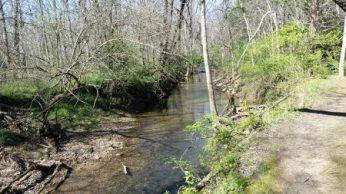Upstream look of stream path follows