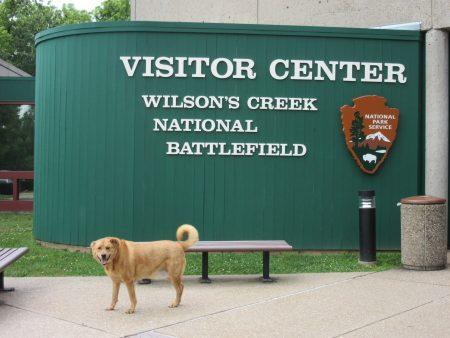 Chewie at National Battlefield