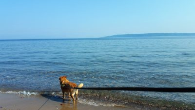 Chewie at Lake Superior