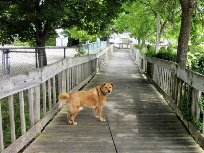 Walking boardwalk in St. Ignace