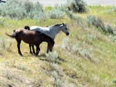 Wild mustangs near the road as we leave