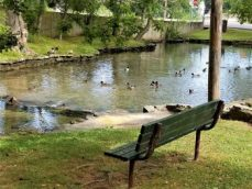 Duck pool at Hoppe Spring Park