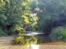 Yadkin Creek - spring fed